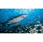 Ocean Underwater World Shark Fish Water Beautiful Hd