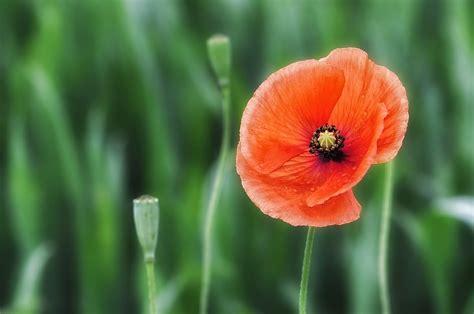 imagenes de flores mas bonitas flores hermosas las 18 flores m 225 s bonitas del mundo