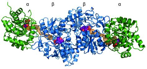 protein of bacteria bacteria perfected protein complexes more than 3 5 billion