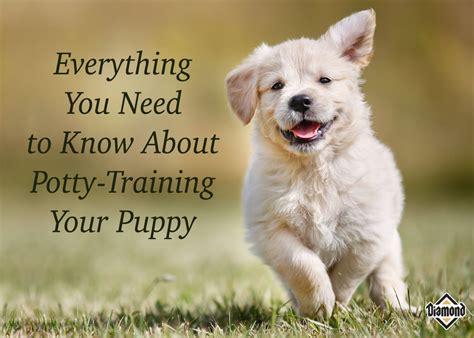 12 week puppy still not potty trained everything you need to about potty your puppy