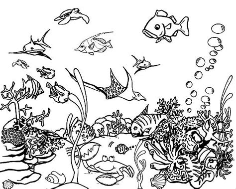 realistic underwater coloring pages 9 sea coloring pages jpg ai illustrator download