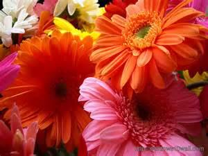 beautiful flowers image beautiful flowers wallpaper free download windows 10