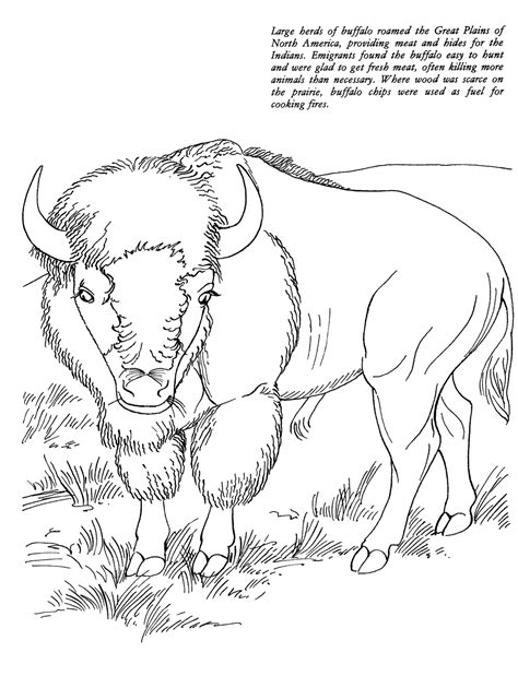 animal coloring to print quot buffalo quot for kids