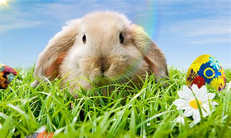 why is the rabbit associated with easter why is the bunny associated with easter