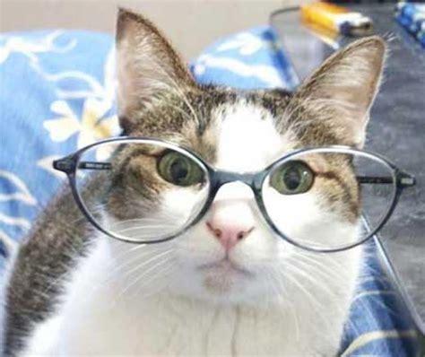 imagenes nuevas y divertidas elhacker net fotos gatos divertidas y graciosas