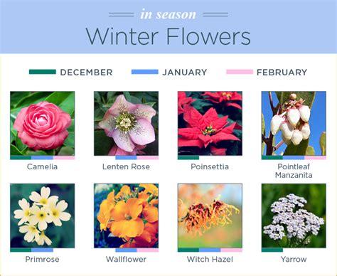 november seasonal flowers what flowers are in season ftd
