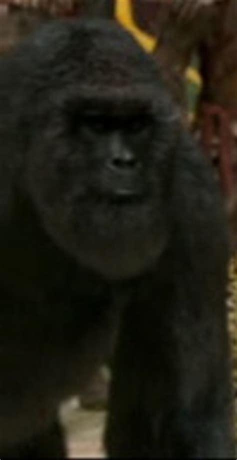 narnia film wiki gorilla the chronicles of narnia wiki fandom powered