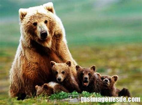 imagenes de animales varios im 225 genes de animales omn 237 voros im 225 genes