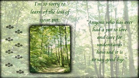 sorry for the loss of your sympathy quotes pictures page 5