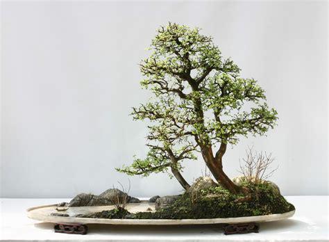 vasi bonsai fai da te chinois du penjing mon jardin chinois