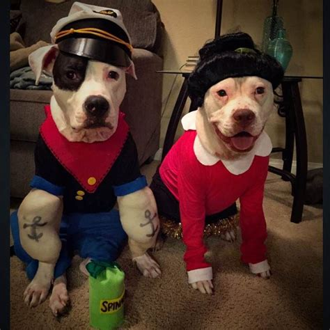is olive for dogs 25 best ideas about costumes on costumes black