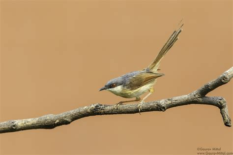 Backyard Bird Photography by Tips For Backyard Bird Photography