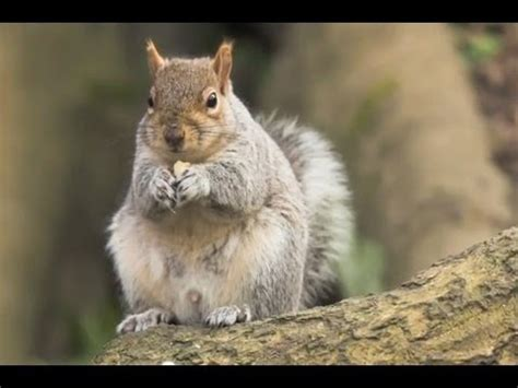 5 fun facts about squirrels youtube