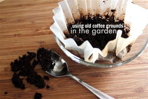 Coffee Grounds For Gardening by 5 Ways To Use Coffee Grounds In The Garden The Creek