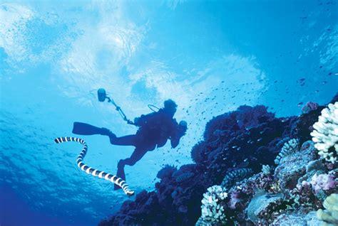 niue dive diving below the rock dive magazine