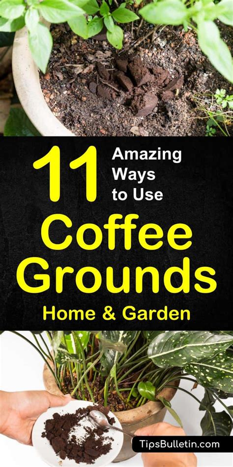 11 Ways To Use Coffee Grounds In The Garden Coffee Grounds Vegetable Garden