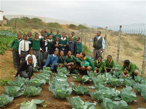 Community Vegetable Gardens Hact Durban South Africa Community Vegetable Gardens