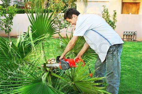 garten palmen schneiden palmen im garten stockfoto colourbox