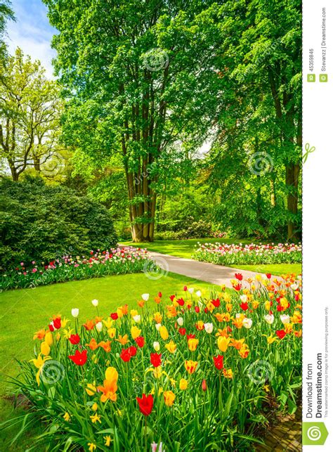 Flowers Garden Image Garden In Keukenhof Tulip Flowers And Trees Netherlands Stock Photo Image 45359846
