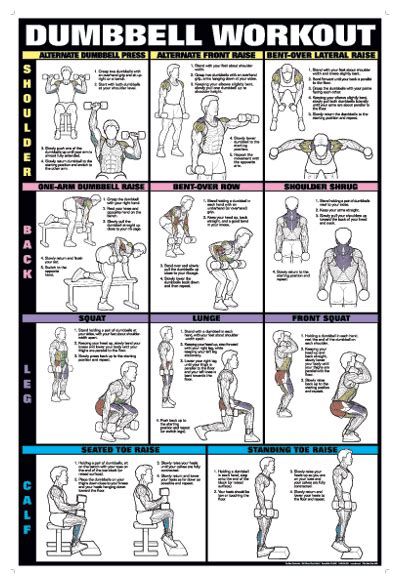 dumbbell workout chart workout charts