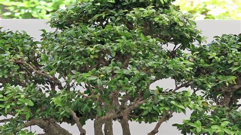 types of garden bushes garden plant care types of boxwood plants