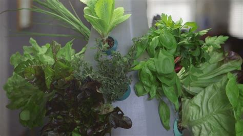 hydroponic root vegetables root by ohneka farms provides a smart hydroponic gardening