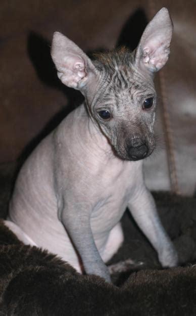 Best starter dog breed dog breeds picture