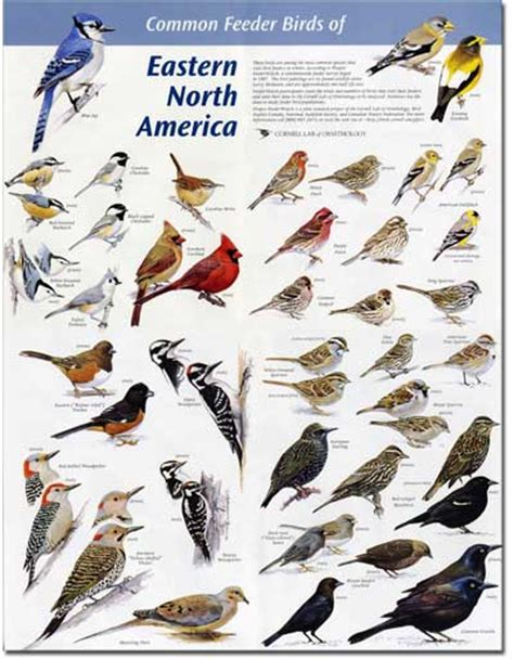north carolina birds identification bing images bird