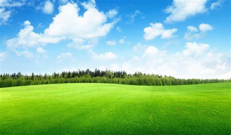 clouds trees field  grass beautiful nature landscape sky