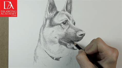 dogs to draw how to draw dogs lesson by drawing academy drawing academy