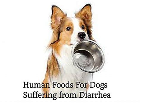 kaopectate for dogs 10 human foods for dogs with diarrhea or upset stomach for dogs animals and