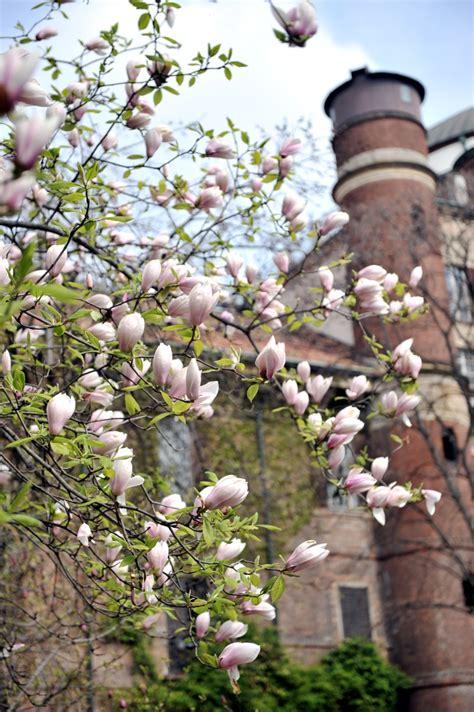 giardini botanici lombardia shakespeare a brera rete orti botanici della lombardia
