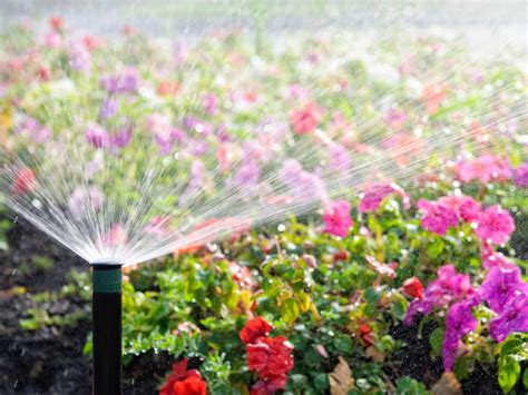 choosing an irrigation system hgtv