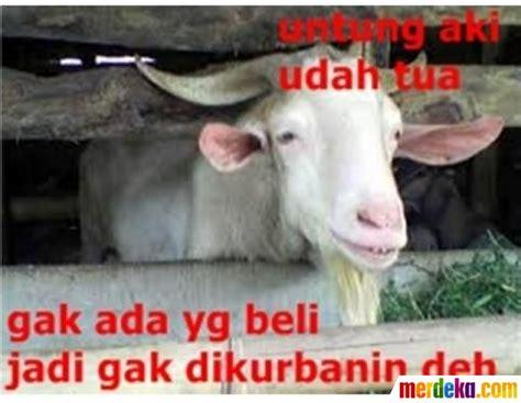 Bibit Kambing Saat Ini foto bikin ngakak ini deretan meme kambing kurban saat