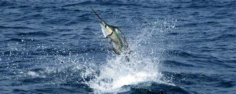 il pesce volante la fauna subacquea s 227 o tom 233 e principe