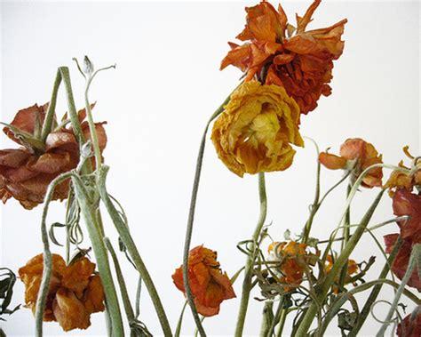 imagenes de flores marchitas flores marchitas