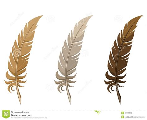 Le Aus Federn by Set Of Three Feathers Stock Vector Illustration Of