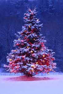 best 25 outdoor christmas trees ideas on pinterest