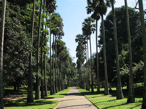 Sri Lanka Nature Botanical Gardens Botanical Garden Peradeniya