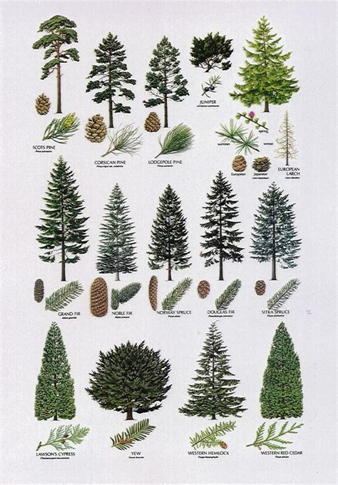 tree species guide best 25 tree identification ideas only on
