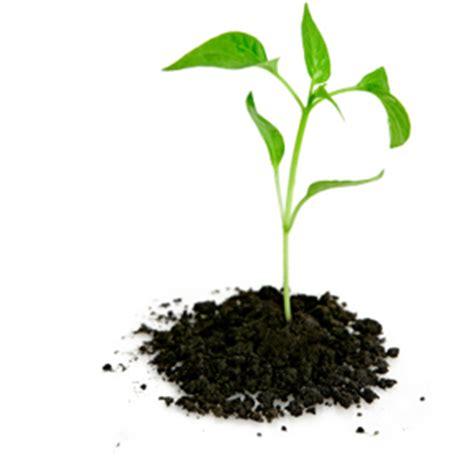 garden organic and green living