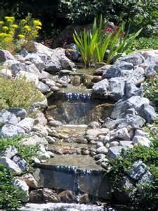 forum aquajardin bassin koi jardin aquatique mare