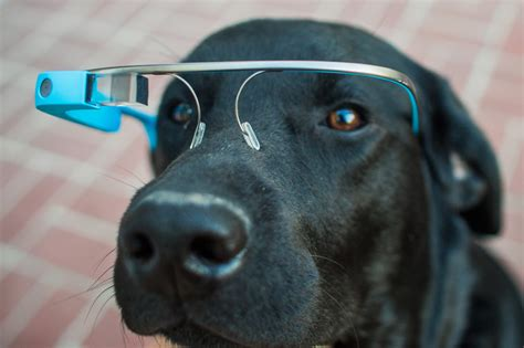 new technology for dogs watches glasses and tablets tech predictions for 2014