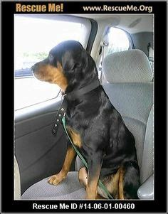 soul rottweiler rescue the world s catalog of ideas