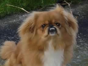 poco small dog picture