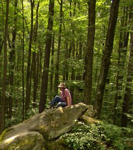 immerse yourself in a forest for better health nys dept