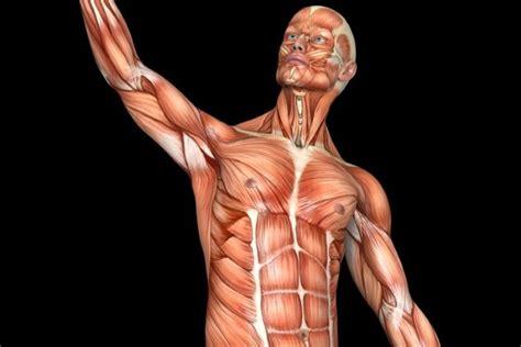 quanti film barbie ci sono quanti muscoli ci sono nel corpo umano