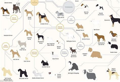 types of dogs chart the family tree of dogs infographic reveals how every breed is related daily mail