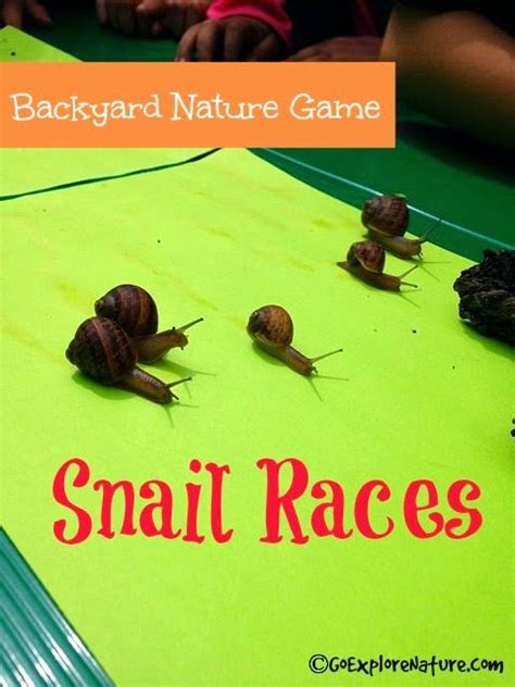 how to find a snail in your backyard 1000 images about snails on pinterest step by step