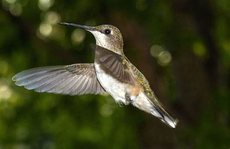 when should hummingbird feeders be taken down